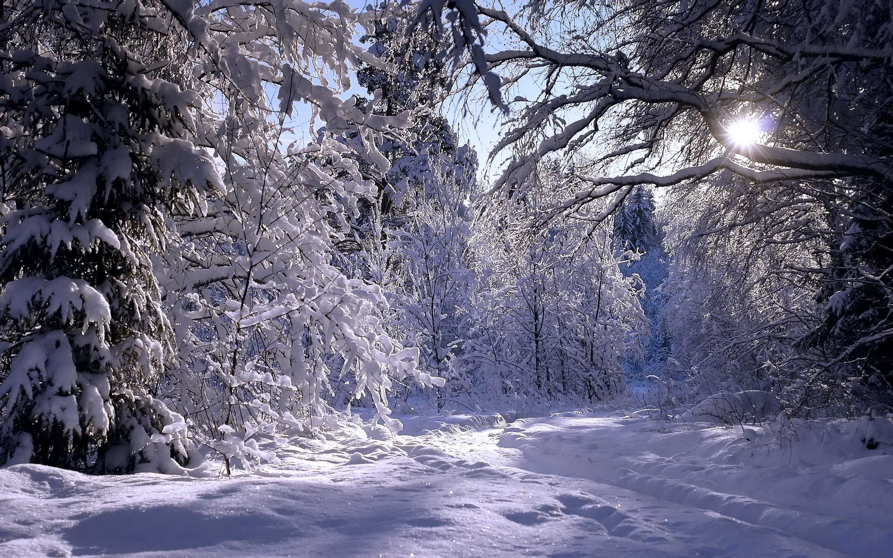 <span>Winter Forest</span>